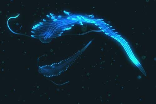 Bioluminescenza marina: animale luminoso azzurro