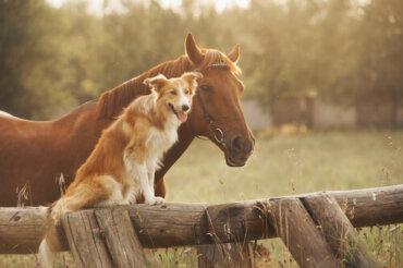 Combattere l'artrosi in cani e cavalli con le cellule staminali