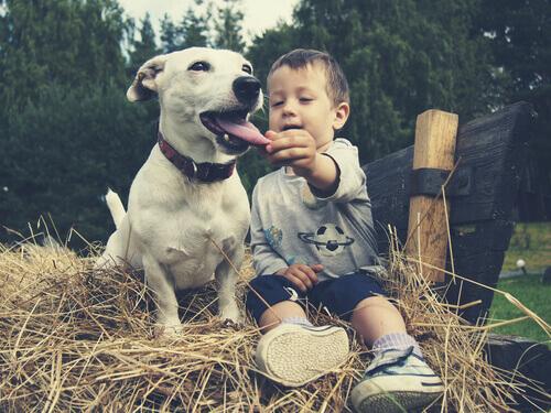 Toxocariasi nei cani: cane con bambino sulla paglia