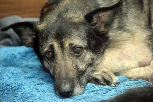 Cane soffre di gastrite.