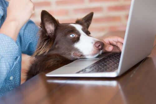 Cane con la testa sul computer.