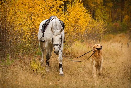Cane porta a spasso un cavallo