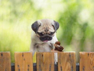 Che cosa rischiano i cani che mangiano le lumache?