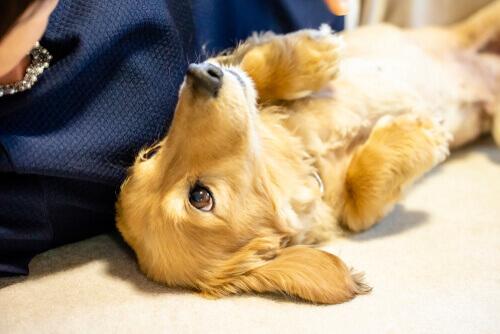 Cane malato a pancia in sù