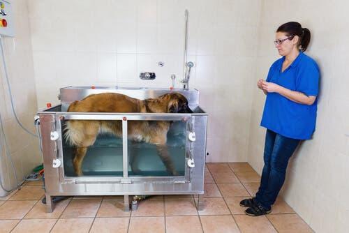 L'idroterapia per cani offre un gran numero di benefici