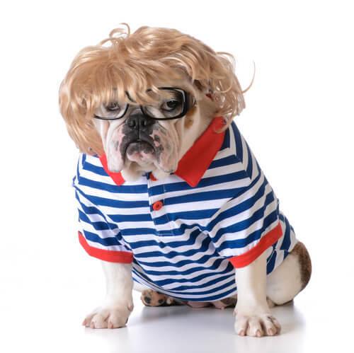 Cane indossa occhiali, maglia e parrucca bionda.