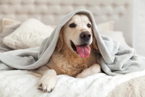 Le razze di cani che meglio sopportano il freddo