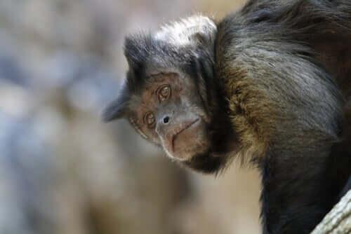 Un centro di recupero animali in Bolivia è in pericolo