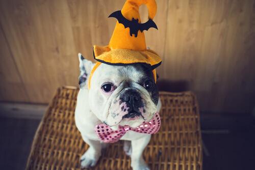 Un costume di Halloween per il vostro animale domestico