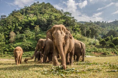 Dove vivono gli elefanti asiatici e africani?