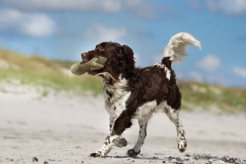 Scopriamo insieme cos'è l'etologia canina