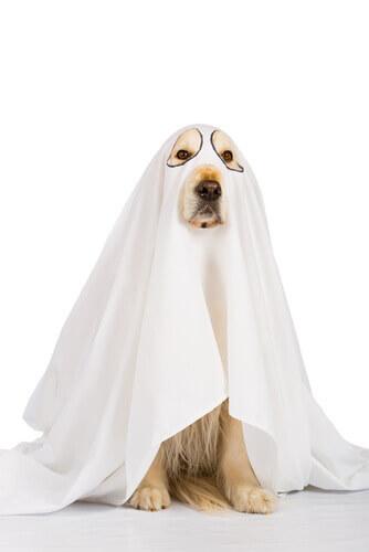 Costume di Halloween per cane da fantasma.