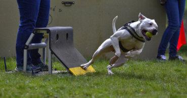 Flyball: 5 consigli per praticarlo con il vostro animale domestico