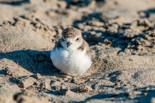 Uccellino seduto sulla spiaggia