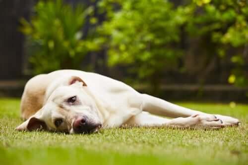 Gastrite nel cane: cause e trattamenti