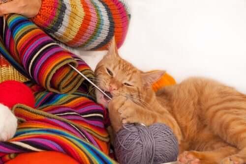 Gatto gioca con un gomitolo.