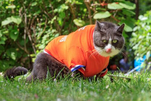 Gatto indossa una maglietta arancione.