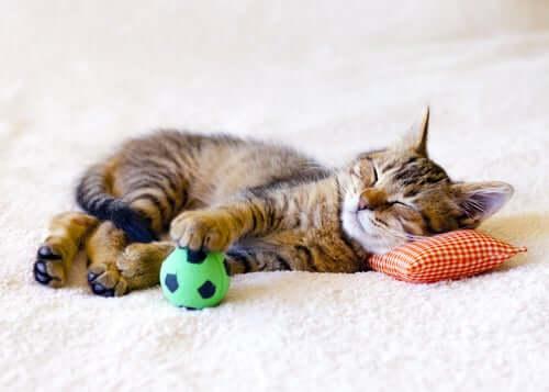 Gattino si riposa con una pallina verde.