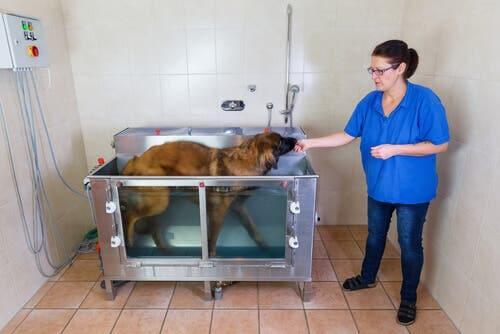 I tanti benefici dell'idroterapia per cani