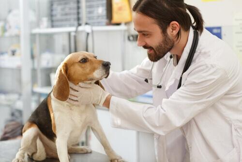 Cause e trattamento dell'ipertiroidismo nei cani