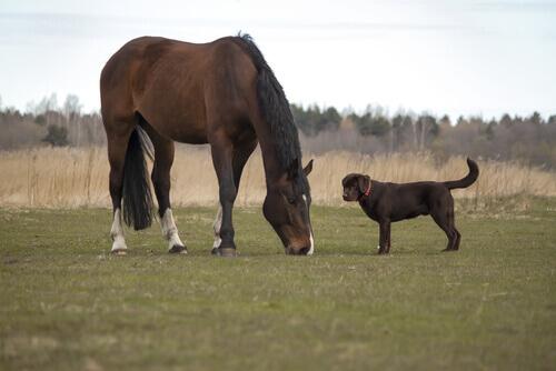Artrosi in cani e cavalli: cane e cavallo in un prato
