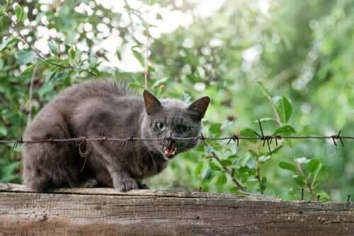 Il vostro gatto ha la rabbia felina? 3 segnali per scoprirlo