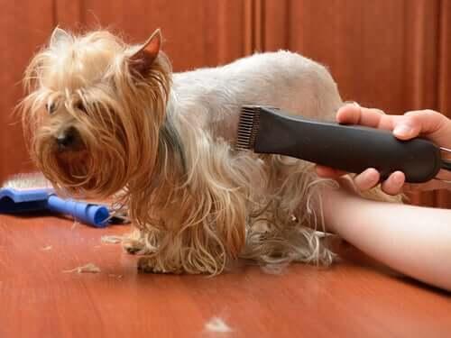 Provate anche voi la tosatrice per cani