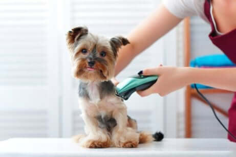 Per utilizzare bene una tosatrice per cani è bene possedere prima alcune conoscenze al riguardo.