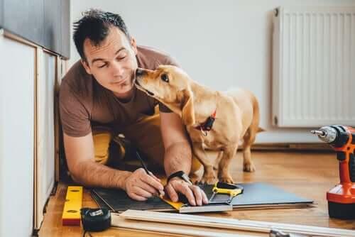 In ufficio con il cane, ora in Thailandia si può