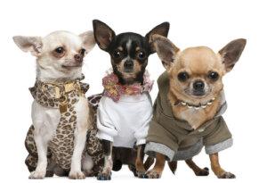 4 consigli per nutrire e vestire gli animali domestici senza spendere troppo