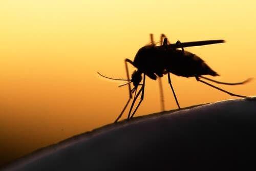 7 curiosità sulle zanzare che non sapevate