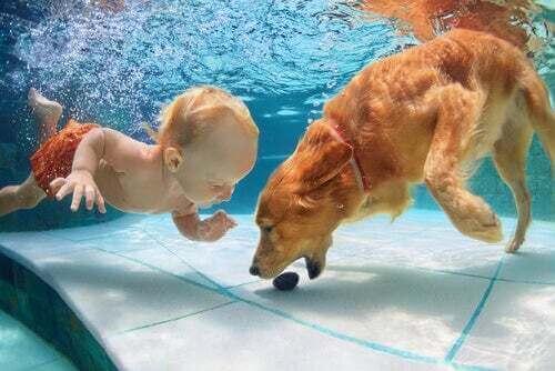 Bambino e cane che nuotano in una piscina.