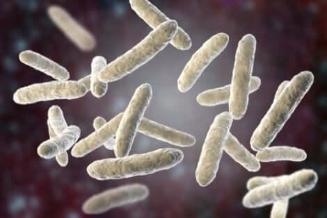 Virus della polmonite negli animali.
