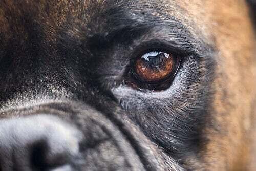 Cecità nei cani: cause, diagnosi e cure