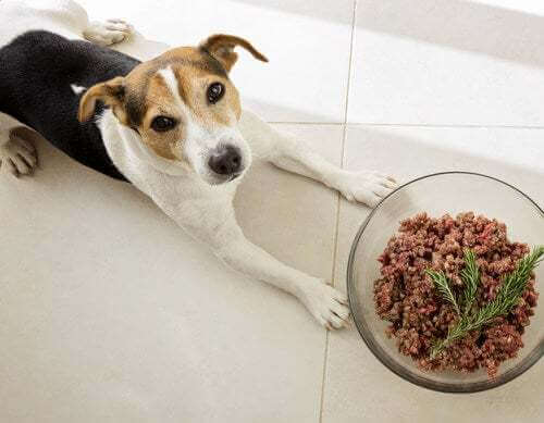 I cani sono carnivori? Proviamo a fare chiarezza