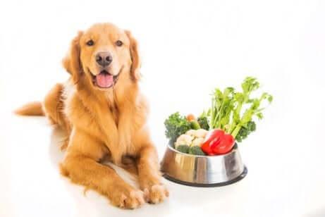 Cane con accanto ciotola piena di verdure.