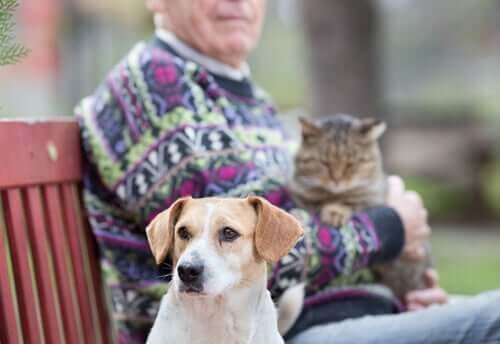 La relazione tra anziani e cani e gatti. Anziano con un gatto in braccio e cane vicino.