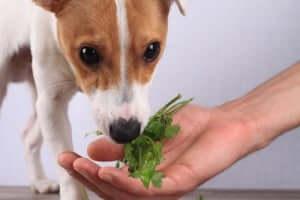 Dieta vegana a base di verdura per il cane.