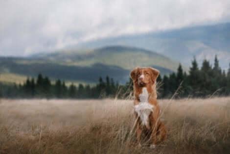 Andare in campeggio con il proprio cane è un'attività didattica e rilassante allo stesso tempo. Cane in mezzo a un campo in montagna.