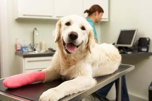 Chirurgia ortopedica veterinaria: cure postoperatorie