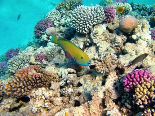Tutto sui coralli e le alghe microscopiche