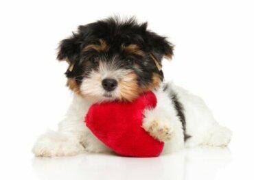 Proteggere la salute cardiaca del cane grazie a 6 consigli