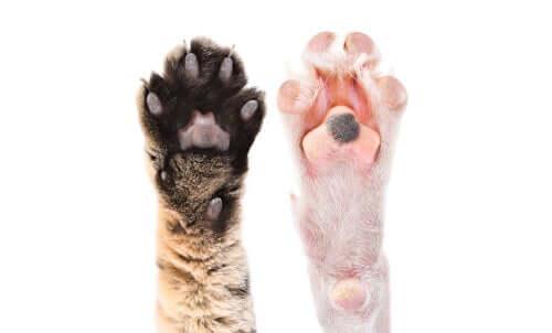 Qualche curiosità sui cuscinetti degli animali