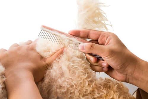 Padrone districa con cura il pelo del cane.
