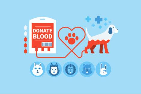 La donazione di sangue negli animali è un'attività che riguarda diverse specie.