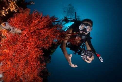 Sub che scatta delle foto sott'acqua tra i coralli.