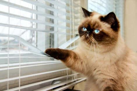 Un'alterazione dell'ambiente in cui vivono può rappresentare la causa di malattie mentali nei gatti.