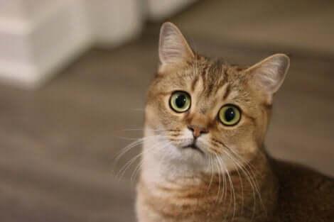 La presenza di stress in un gatto può ripercuotersi molto seriamente sulla sua salute.
