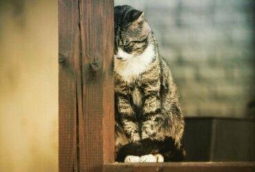 Le tre malattie mentali più comuni nei gatti