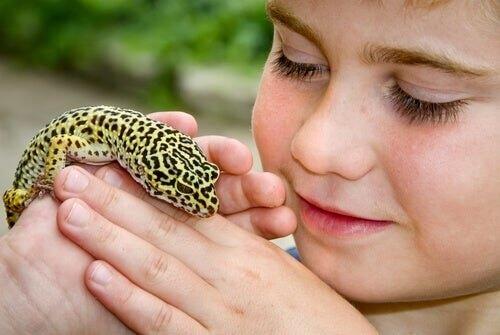 Geco leopardo: un perfetto animale da compagnia